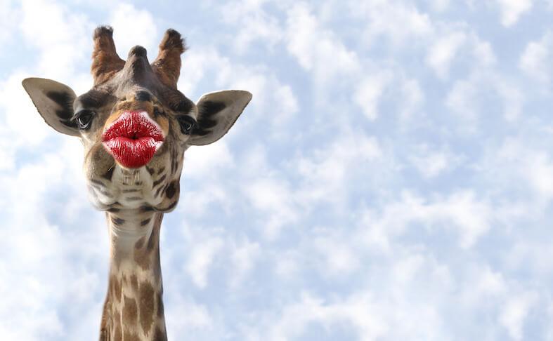 Giraf met sexappeal